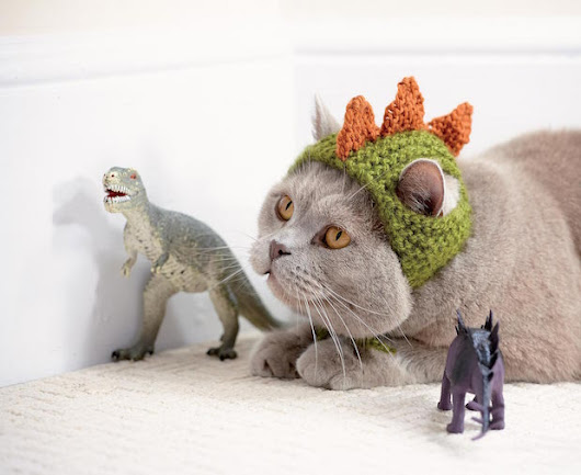 Cats in Hats: Knit a Dinosaur Hat or Crochet a Fox Hat for Your Kitty | Make: DIY Projects, How-Tos, Electronics, Crafts and Ideas for Makers
