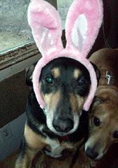 Tut_bunny_411