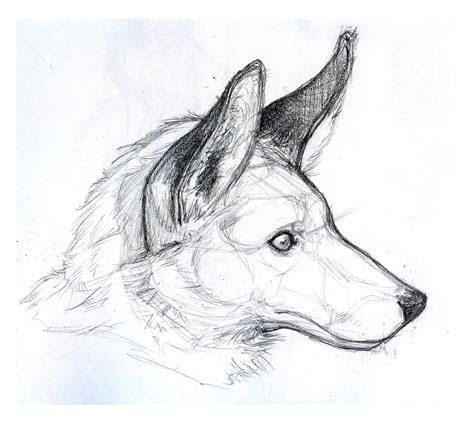 art kimistry  animal drawings  stuff