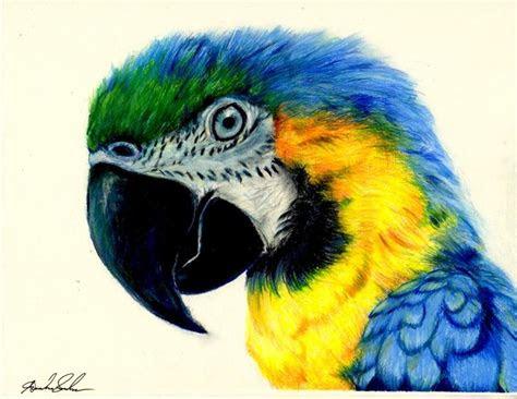 pin  colored pencil art