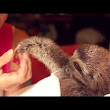 Matty the Baby Sloth Giving a Woman a Flower