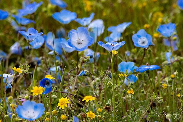 San Luis Obispo County, California