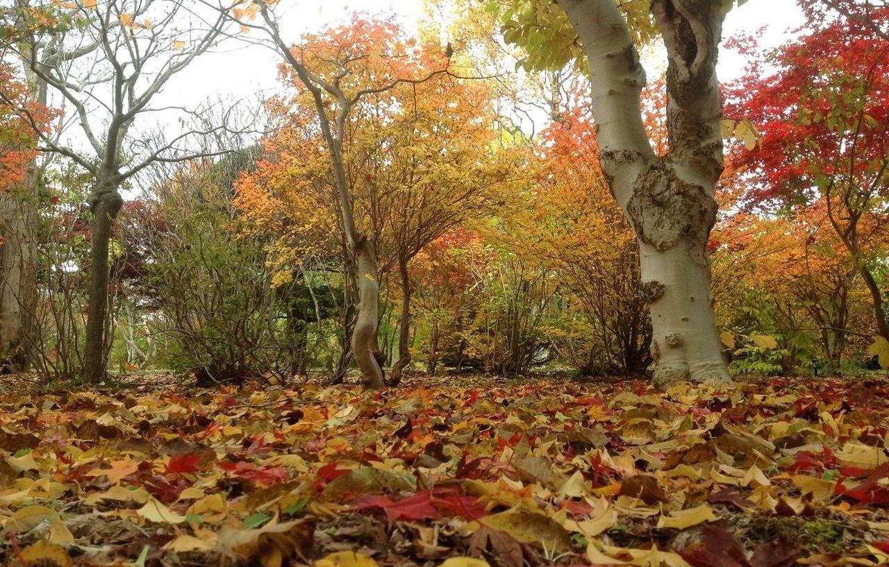 「落ち葉」の画像検索結果