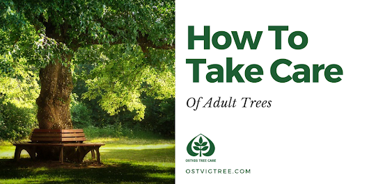 How To Take Care Of Adult Trees - Ostvig Tree Care