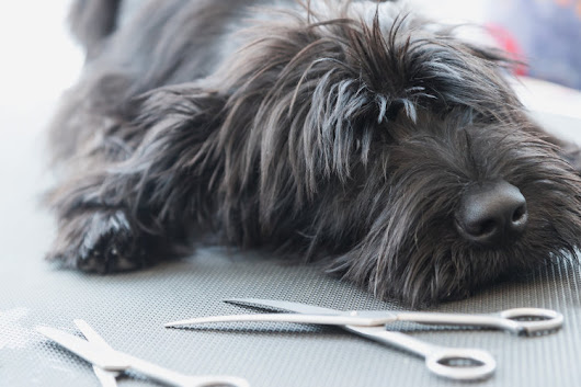 Mobile Pet Grooming: The Pros and Cons | Lucky Dawg Salon Grooming in California