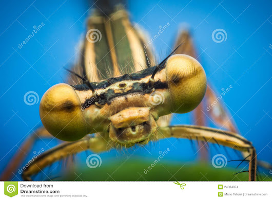 Dragonfly Eyes Closeup Stock Images - Image: 24804874