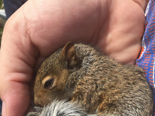 Baby Squirrel Rescue! - The Official Website of Terry Maggert
