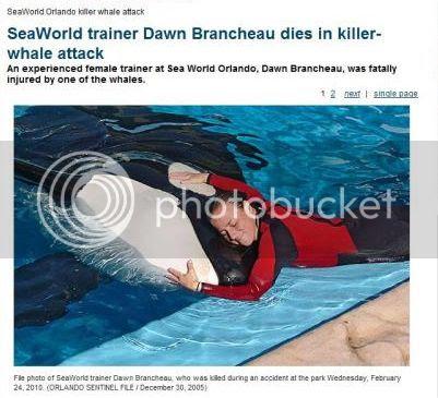 American Power: Trainer Killed in 'Dine With Shamu' Attack: Tilikum