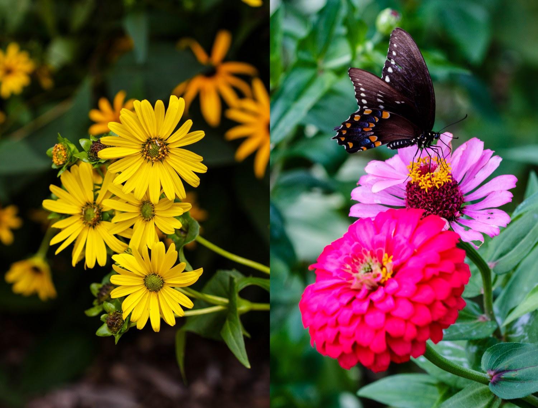 Paleo Spirit in Brooklyn: Botanic Garden, Fatty 'Cue and OddFellows