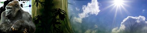 http://www.zougla.gr/App_Themes/default/_gfx/weather/header_1200/PartlyCloudy.png