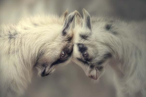 Υπέροχες φωτογραφίες φιλίας ζώων που θα σας φτιάξουν τη διάθεση (14)