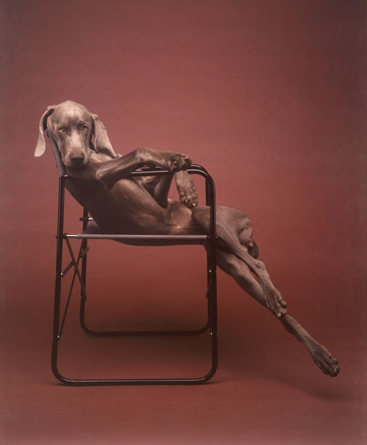 Legend: William Wegman