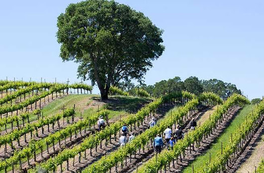 5 Winery Hikes in Sonoma County
