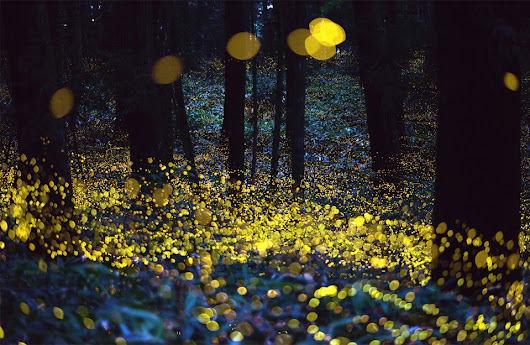 fireflies on long exposure photo