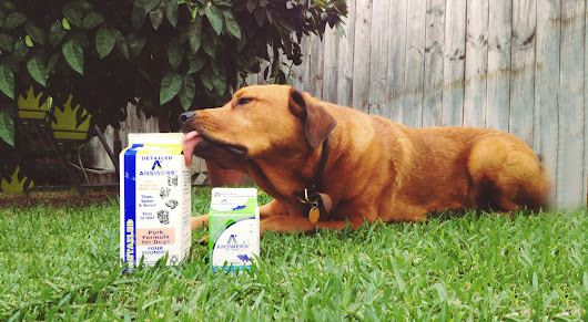 Feeding Your Dog a Raw Diet: Answers from a Professional