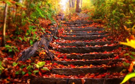 Resultado de imagem para imagens- folhas de outono sensuais