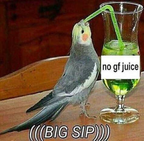 doplrcom memes  gf juice big sip