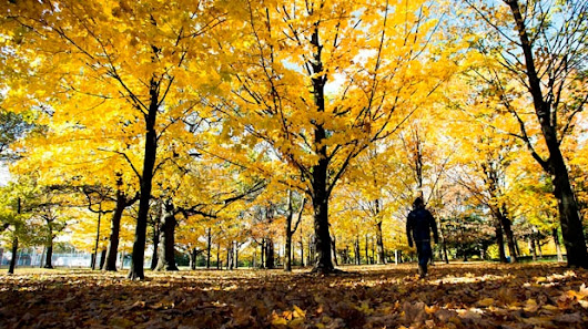 Fall will make up for 'bummer of a summer,' meteorologist forecasts