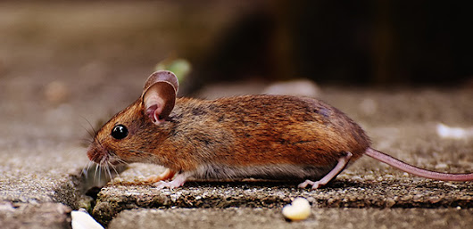 Sharing Your Space With Rodents: Pointe Pest Control