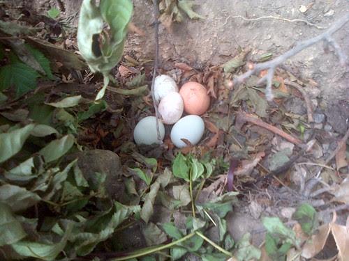 eggs hidden Jul 13
