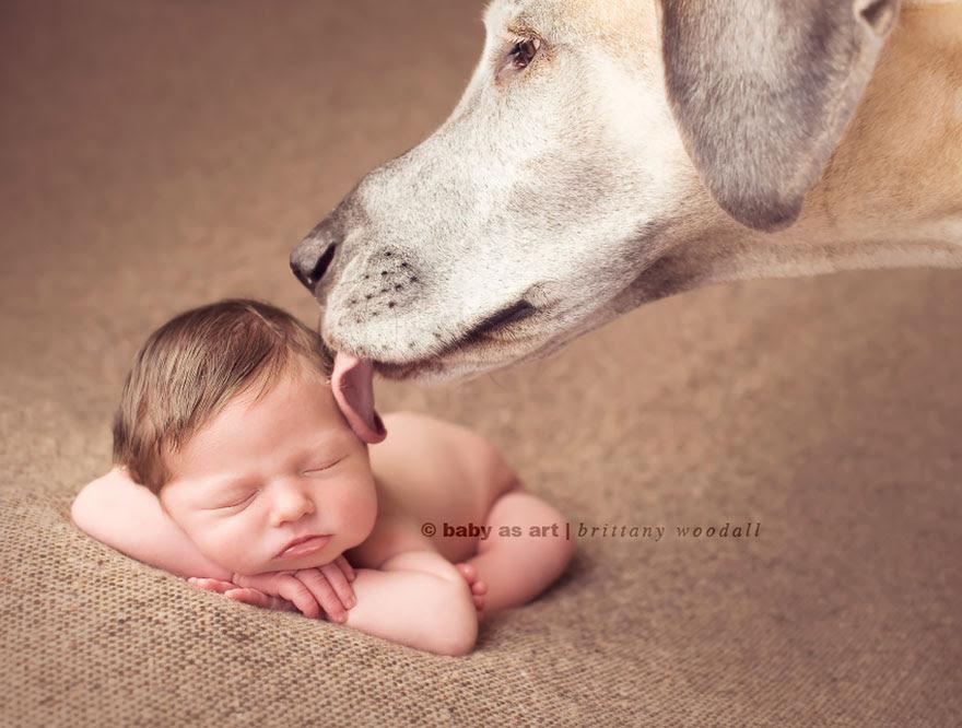 Little Babies, Big Dogs
