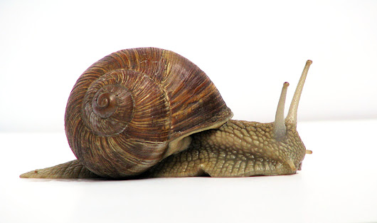 Electrons flow slower than a snail?