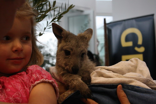 Little girl wih baby kangaroo