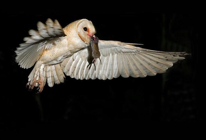 Bird_22 (700x477, 110Kb)