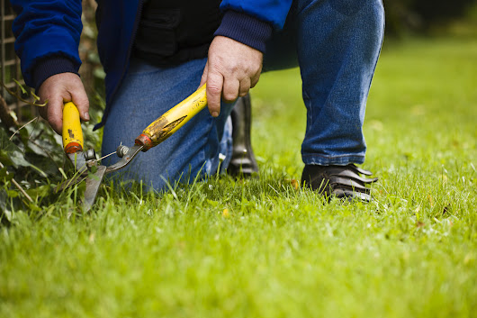 Why Gardening Doesn't Have to Give You Lower Back Pain