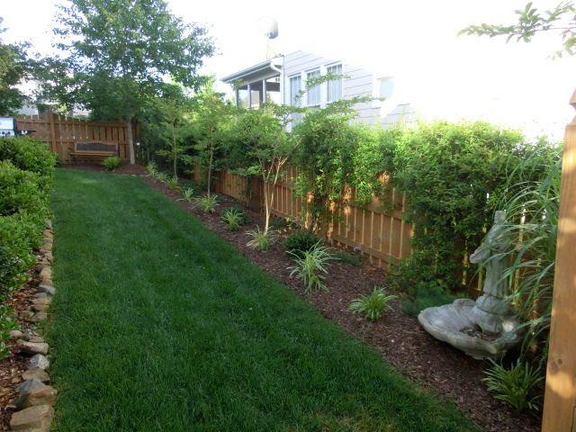 Small Trees along Fence