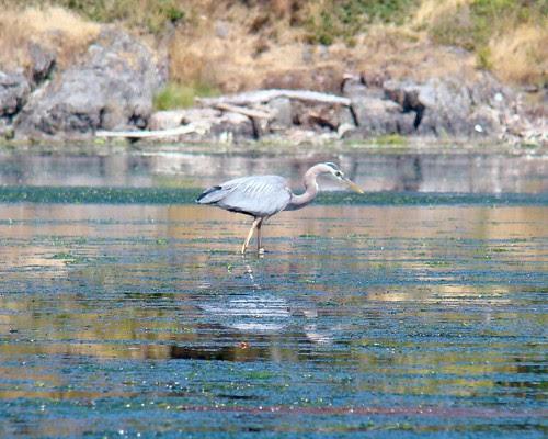 2008-07-03 Esquimalt 430