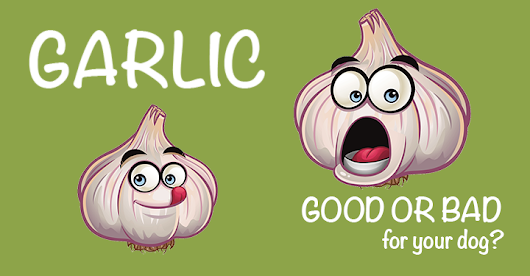 Garlic: Friend Or Foe? - Dogs Naturally Magazine