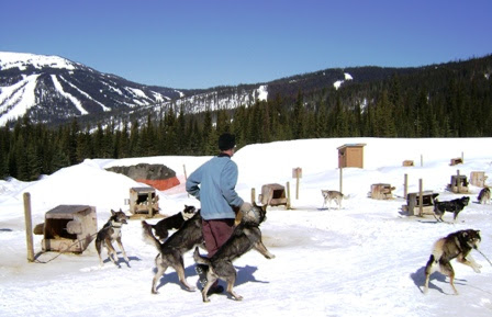 Dog Sledding Vacations. What you need to know before booking.