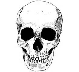 vector skull image   vector art  vectors