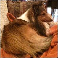 Maya's Dog