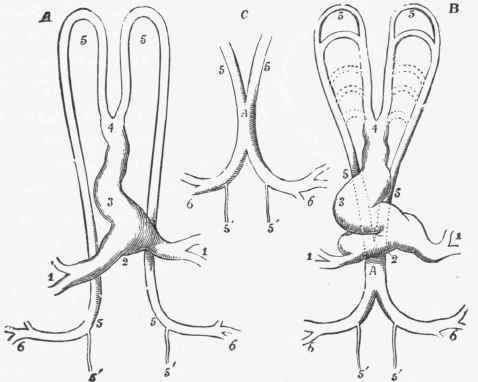 Animal Design Tattoo: human veins and arteries diagram