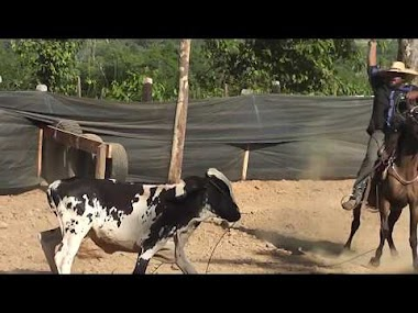 VIDEOS : Final Laço em Dupla - 1° Festa de Laço Comprido | PISTA DA AMIZADE | Castanheiras RO