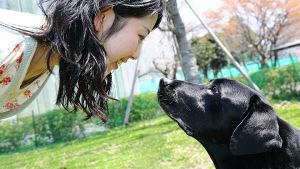Contacto. La mirada entre el perro y su dueño dispara oxitocina en el cerebro de ambas especies.
