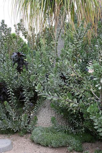 huntington grey black plantings
