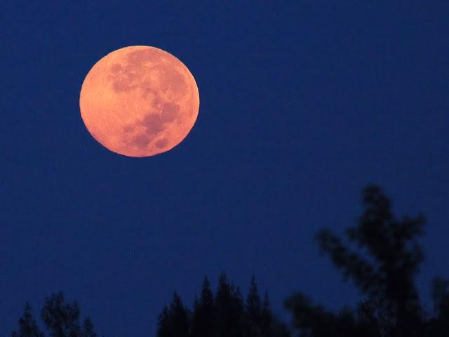 Harvest Moon setting 20130919