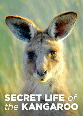 Secret Life of the Kangaroo - Season 1
