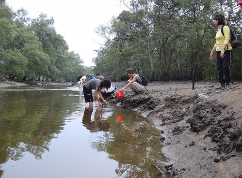 Mega Marine Survey along a stream at Mandai mangroves