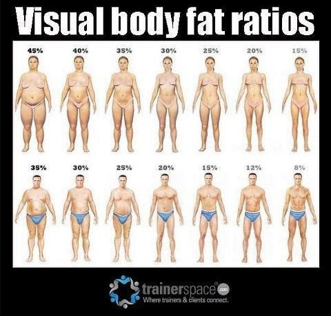 body fat percentage abs chart