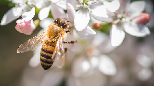 How the world can save bees and pollinating insects