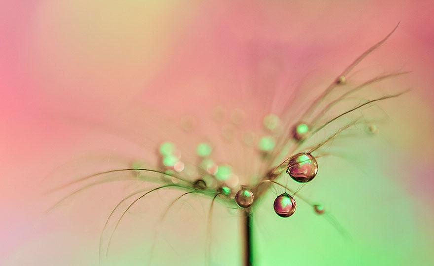 macro-nature-photography-ivelina-blagoeva-20