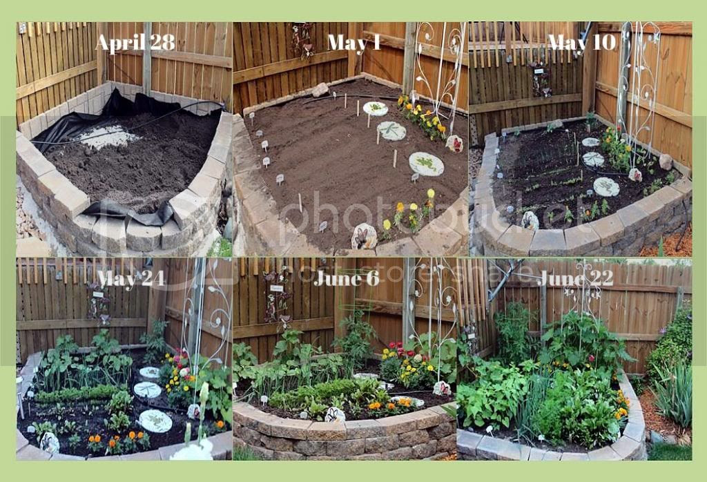 Life & Time of My Raised Bed Garden - Easy Life Meal & Party Planning