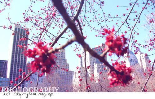 http://i402.photobucket.com/albums/pp103/Sushiina/ny5.jpg