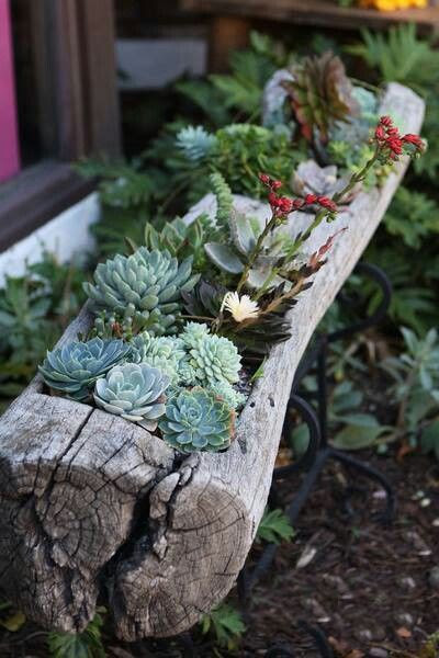 Old Tree Log Turned into a Succulent Garden #pinaholicmyrie