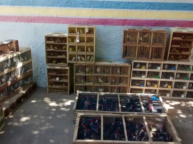 Aves seriam comercializadas em Caruaru (Foto: Polícia Militar/Divulgação)