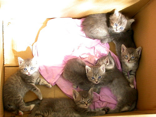 box o kittens